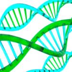 ゲノム研究の求人の仕事内容と転職成功する戦略を解説